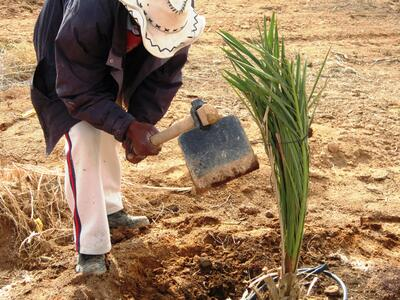 Planting a tree on arid land