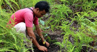 Pesalat Reforestation Project in Indonesia
