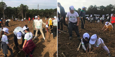 tree planting in turkey